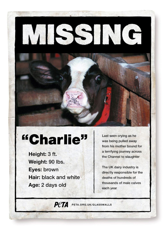 Find Charlie
